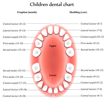 Tooth Eruption Chart - Pediatric Dentist in Madison, MS